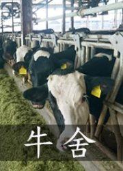 牛舍-凱煒通風0971223172